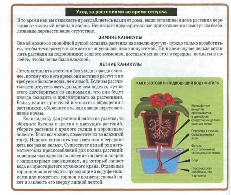 статьи о растениях из  газет и журналов 935b9c10