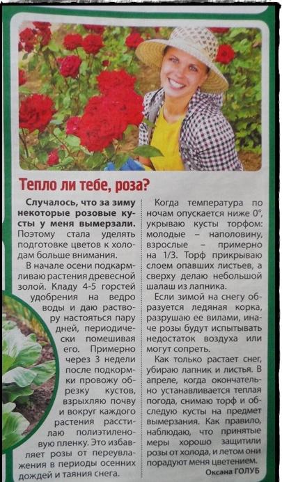 статьи о растениях из  газет и журналов Aoicjm10