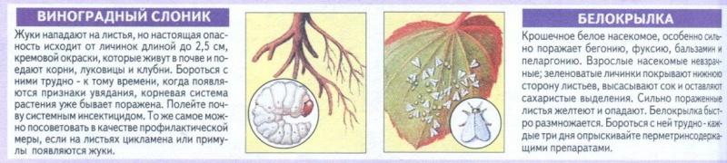 вредители комнатных растений Bsxu3u10