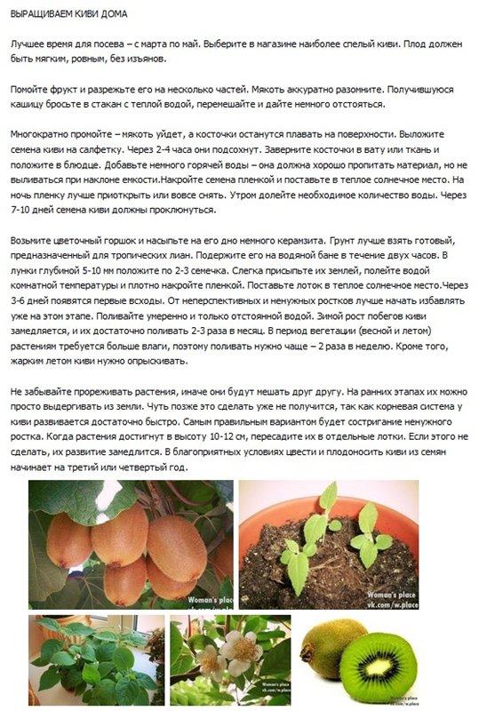статьи о растениях из  газет и журналов C296f910