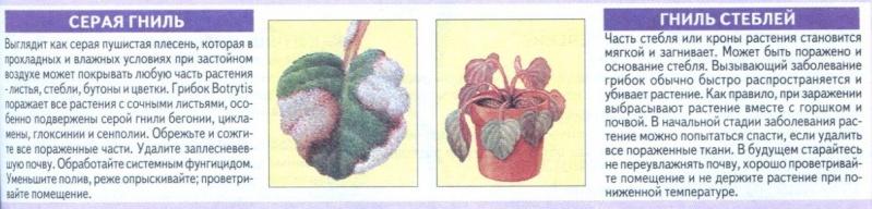 Болезни комнатных растений E6a6d410