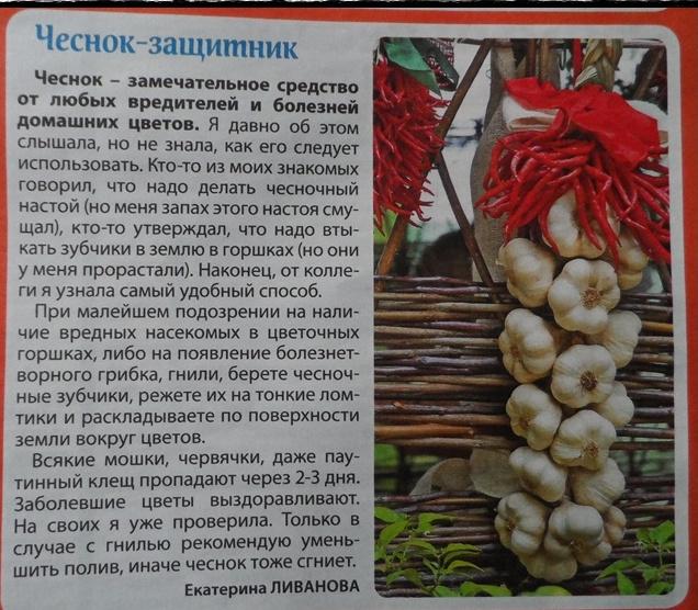 статьи о растениях из  газет и журналов Hp7i8p10
