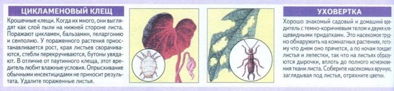 вредители комнатных растений Jauykm10