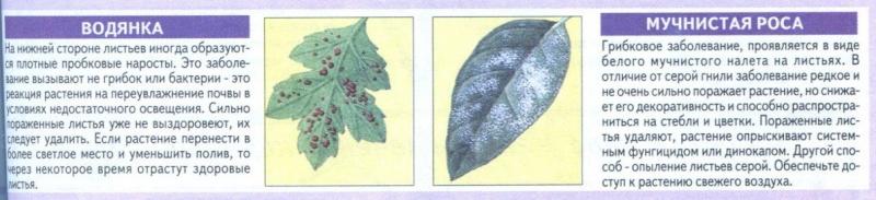 Болезни комнатных растений Nu5c3r10