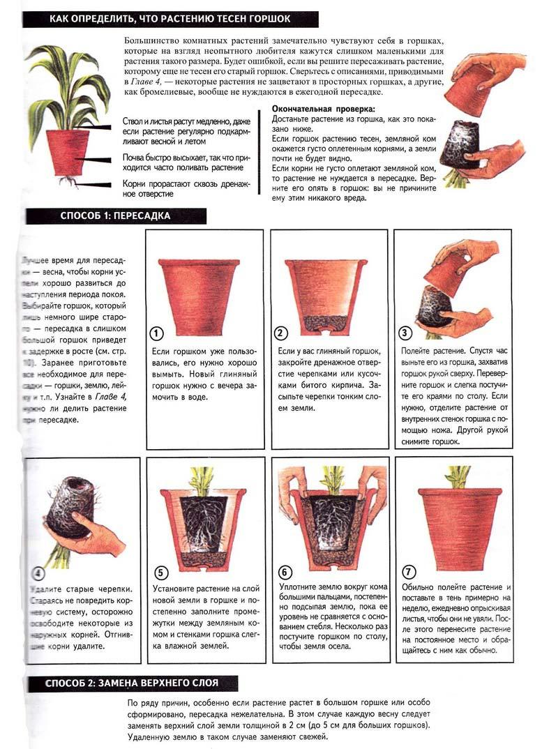 статьи о растениях из  газет и журналов Peresa10