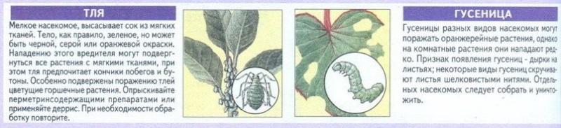 вредители комнатных растений Qjiqol11