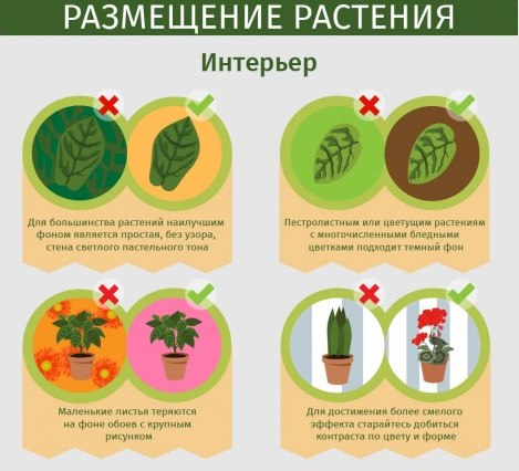 статьи о растениях из  газет и журналов Qntzvz10