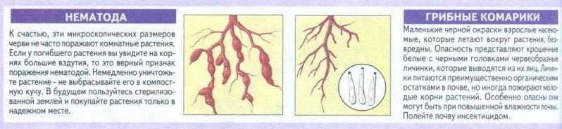 вредители комнатных растений Uzfkcl10