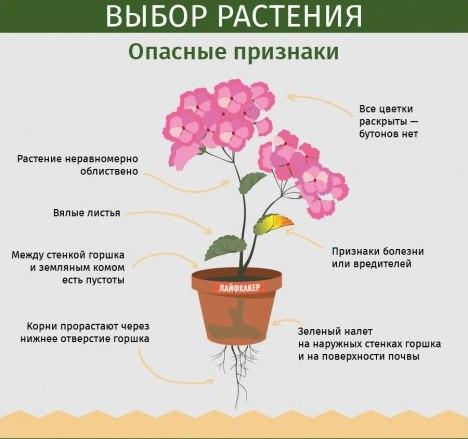 статьи о растениях из  газет и журналов Vgrxpz10