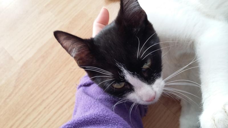 LILOU -  chat femelle, née en août 2015, chez Alina - en FA chez Sabine (dpt77) - décédée 20160310