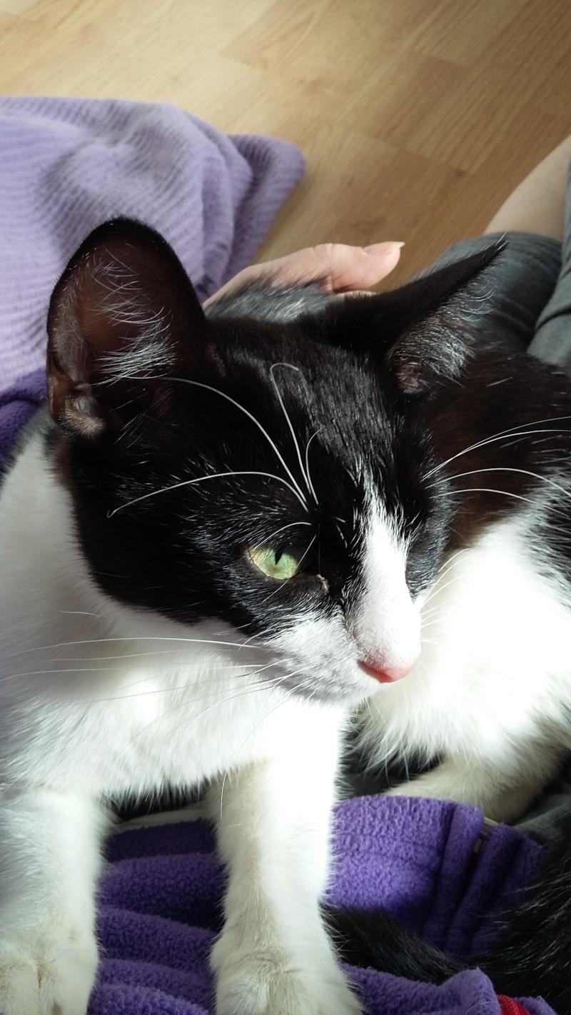 LILOU -  chat femelle, née en août 2015, chez Alina - en FA chez Sabine (dpt77) - décédée 20160311