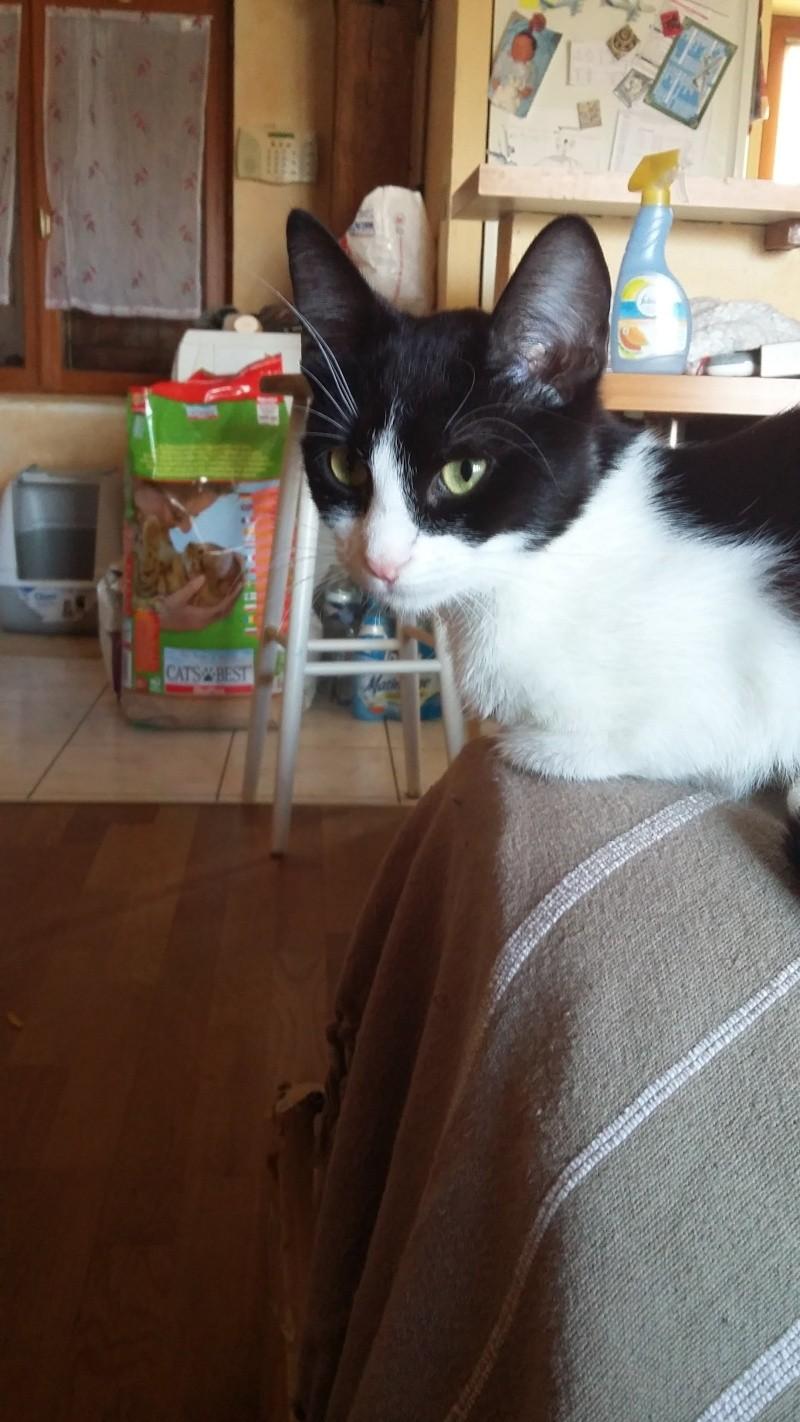 LILOU -  chat femelle, née en août 2015, chez Alina - en FA chez Sabine (dpt77) - décédée 20160312