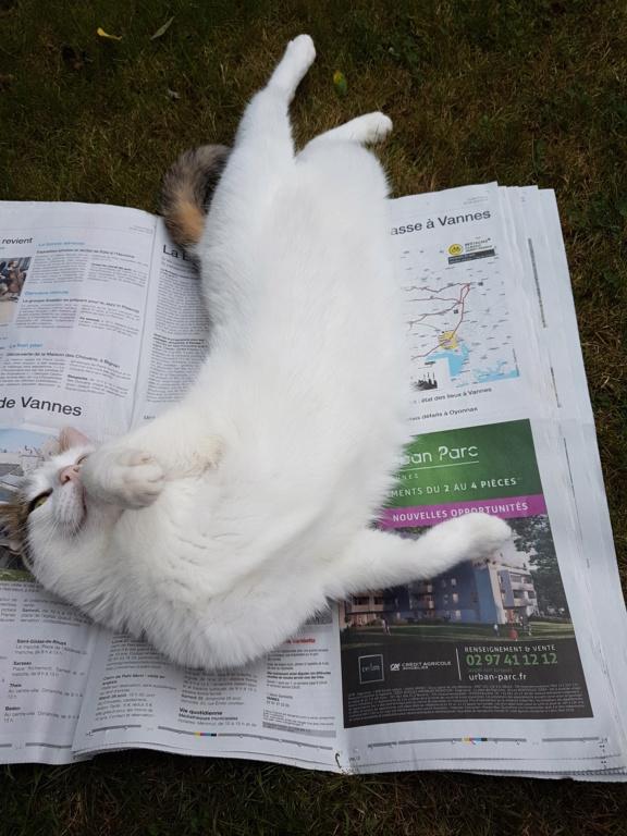 JENNIFER, chatte européenne blanche et tigrée, née en 2014. 20180810