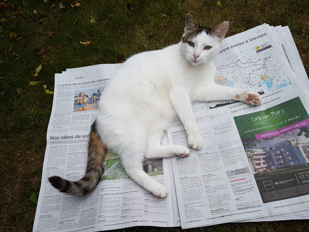 JENNIFER, chatte européenne blanche et tigrée, née en 2014. 20180811