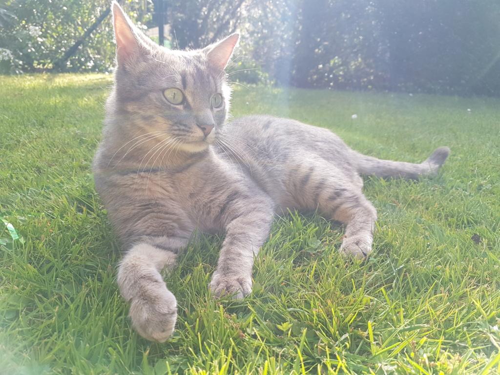 NEWPY, Mâle tigré gris, type européen né en 2017 20190412