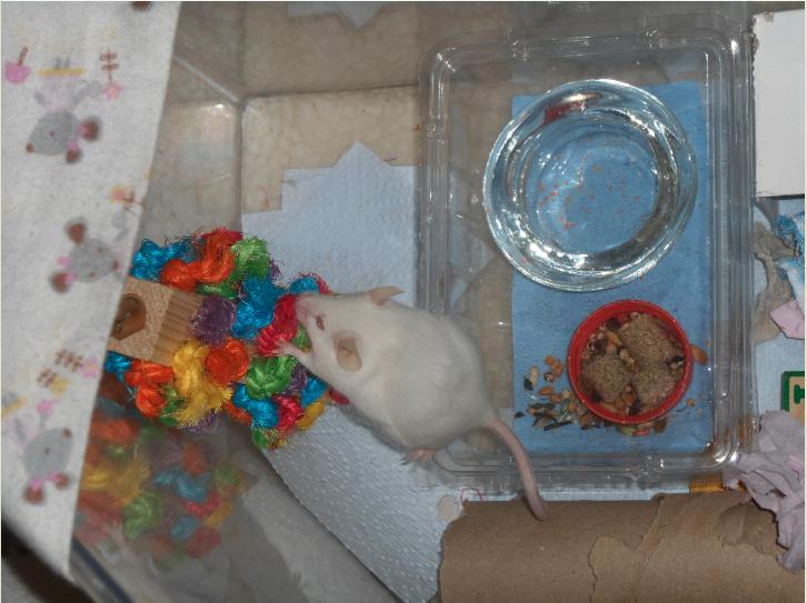Bird toys for mice April_13