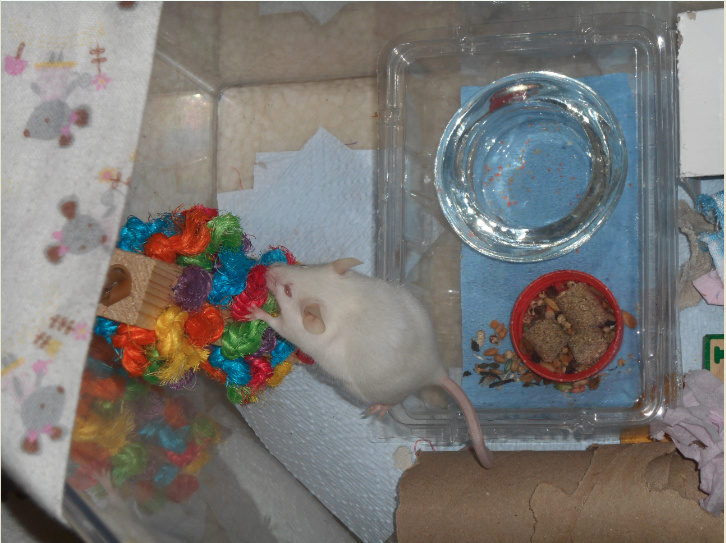 Mouse pee April_14