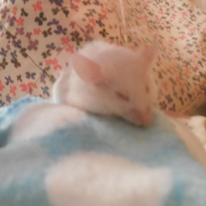 I miss my mouse terribly April_14