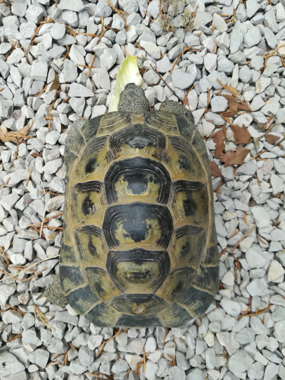 identification de ma tortue Img_2015