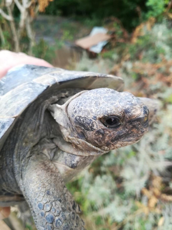 identification de ma tortue Img_2016