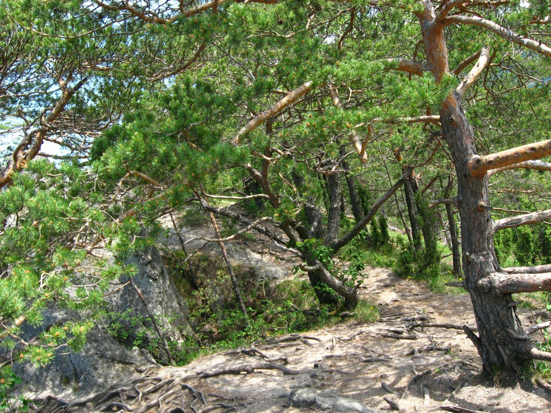 Súľovské skaly 0910