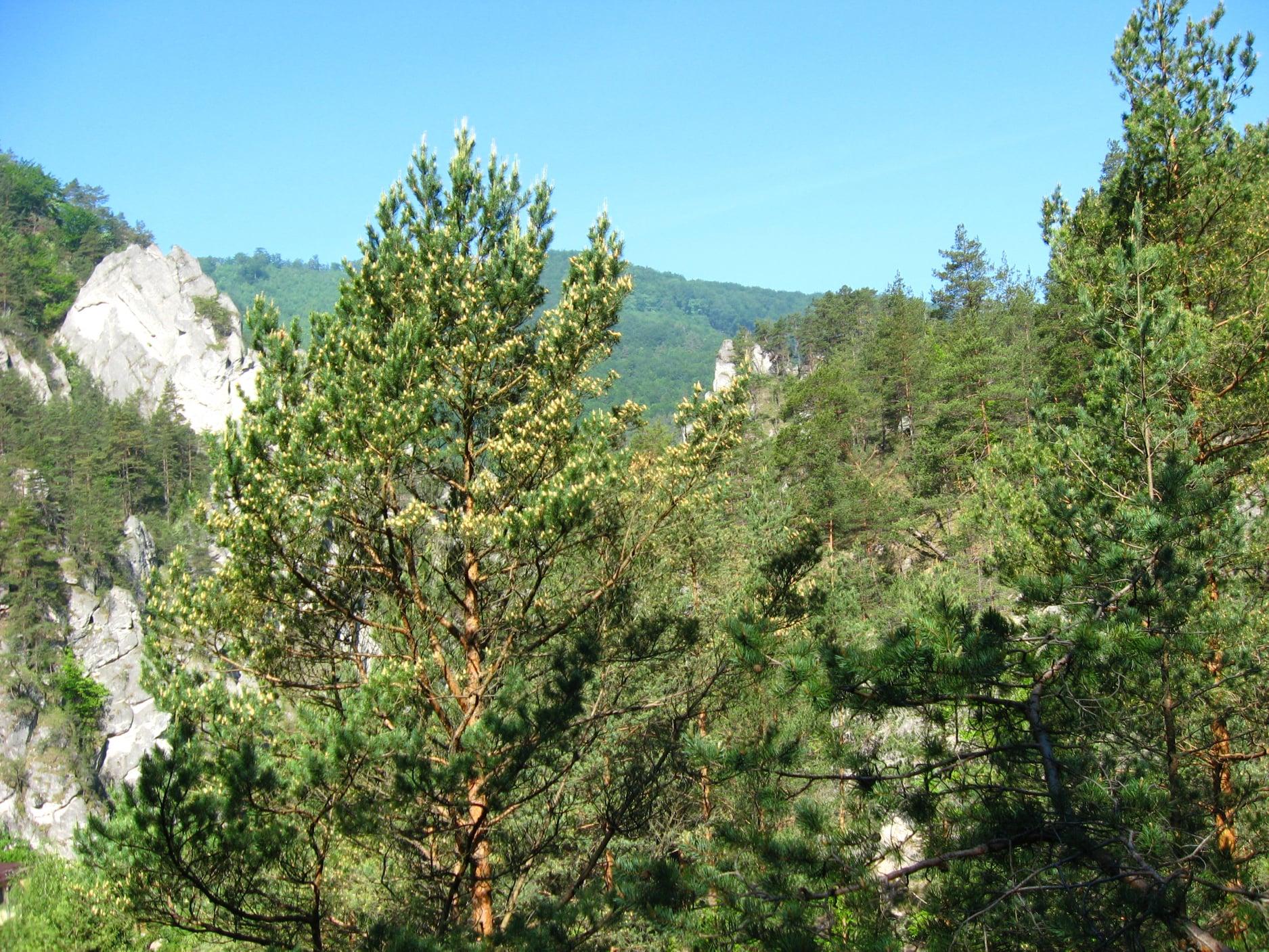 Súľovské skaly 5910