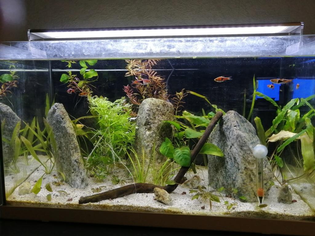Problème algues 60L Img_2036
