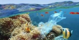 Impacts sur l'environnement et la bodiversité Coral10