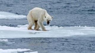 Impacts sur l'environnement et la bodiversité Ours10