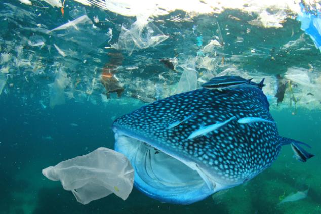 Impacts sur l'environnement et la bodiversité Plasti10