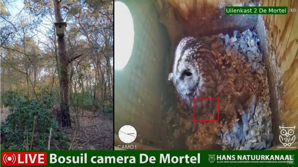 Bosuil de Mortel 2021 - Pagina 5 1e_kui10