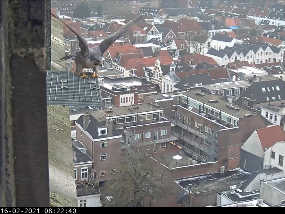 Amersfoort/OLV toren - Pagina 3 A_foor13
