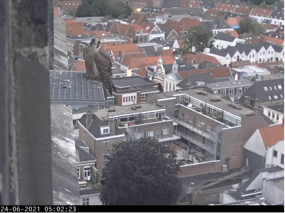Amersfoort/OLV toren - Pagina 8 A_foor14