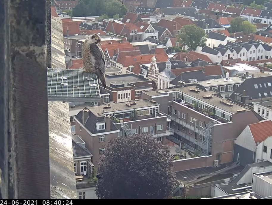 Amersfoort/OLV toren - Pagina 8 A_foor15