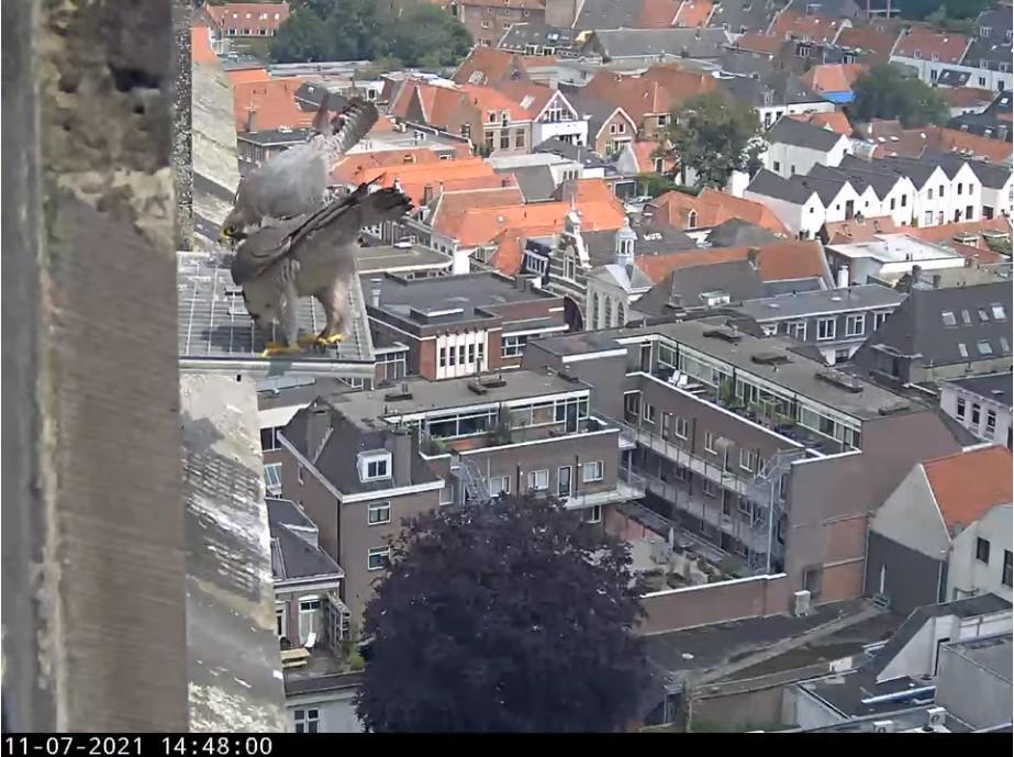 Amersfoort/OLV toren - Pagina 8 A_foor18