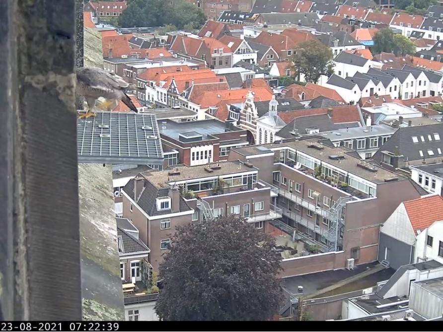 Amersfoort/OLV toren - Pagina 9 A_foor20