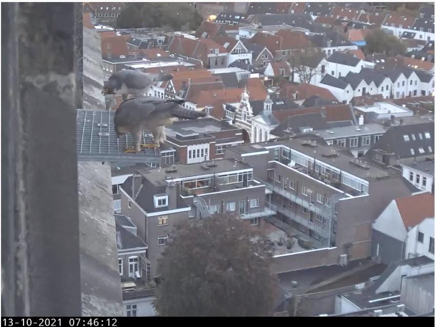 Amersfoort/OLV toren - Pagina 10 A_foor26