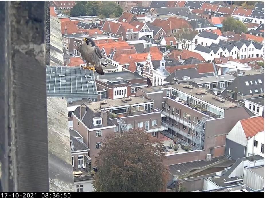 Amersfoort/OLV toren - Pagina 10 A_foor30
