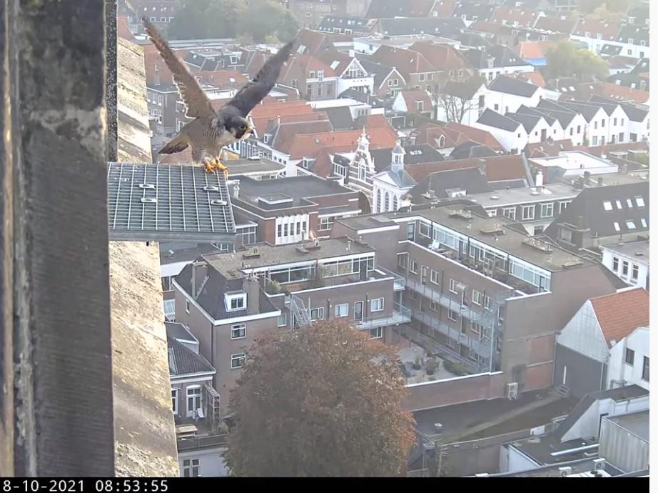 Amersfoort/OLV toren - Pagina 10 A_foor35