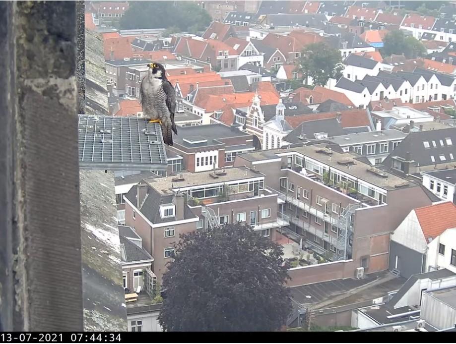 Amersfoort/OLV toren - Pagina 8 Afoort10