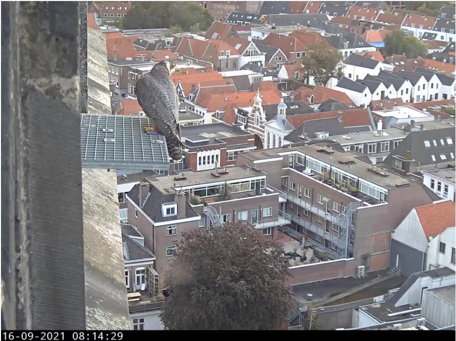 Amersfoort/OLV toren - Pagina 9 Afoort14