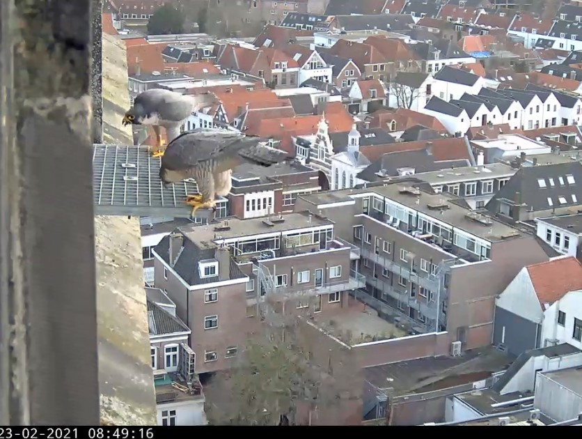 Amersfoort/OLV toren - Pagina 4 Amers101