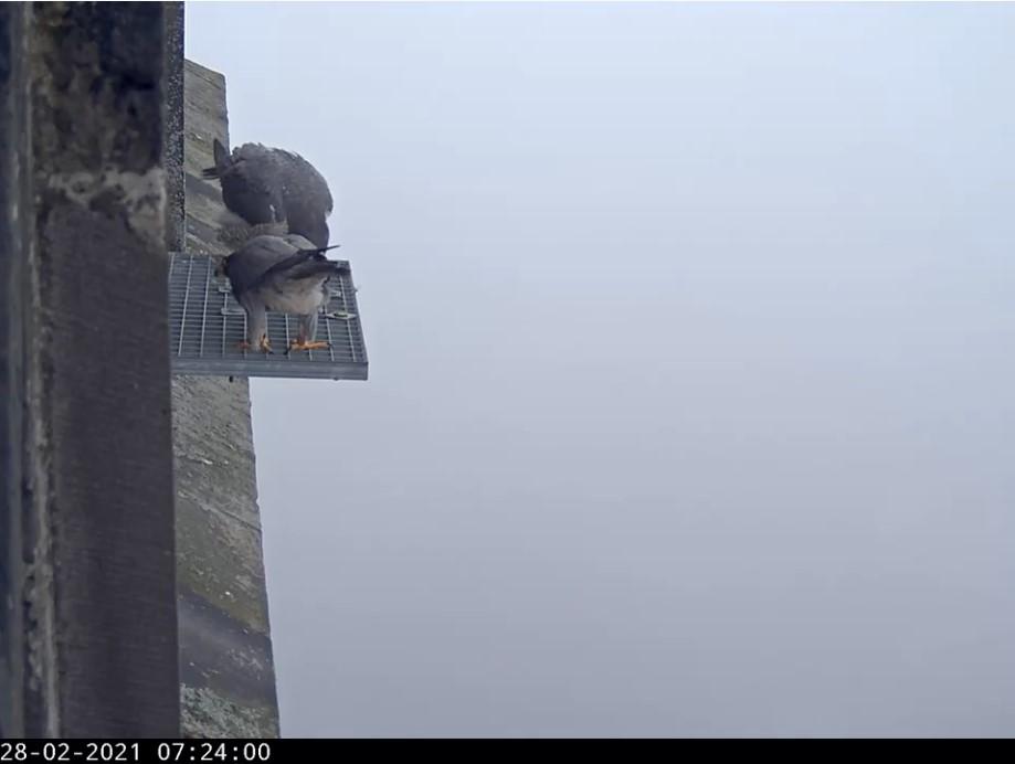 Amersfoort/OLV toren - Pagina 4 Amers105