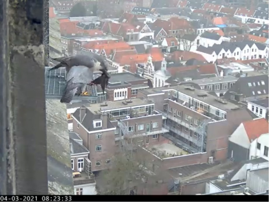 Amersfoort/OLV toren - Pagina 4 Amers108
