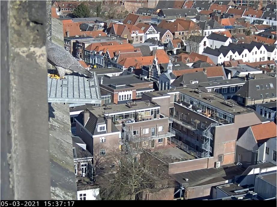 Amersfoort/OLV toren - Pagina 4 Amers110