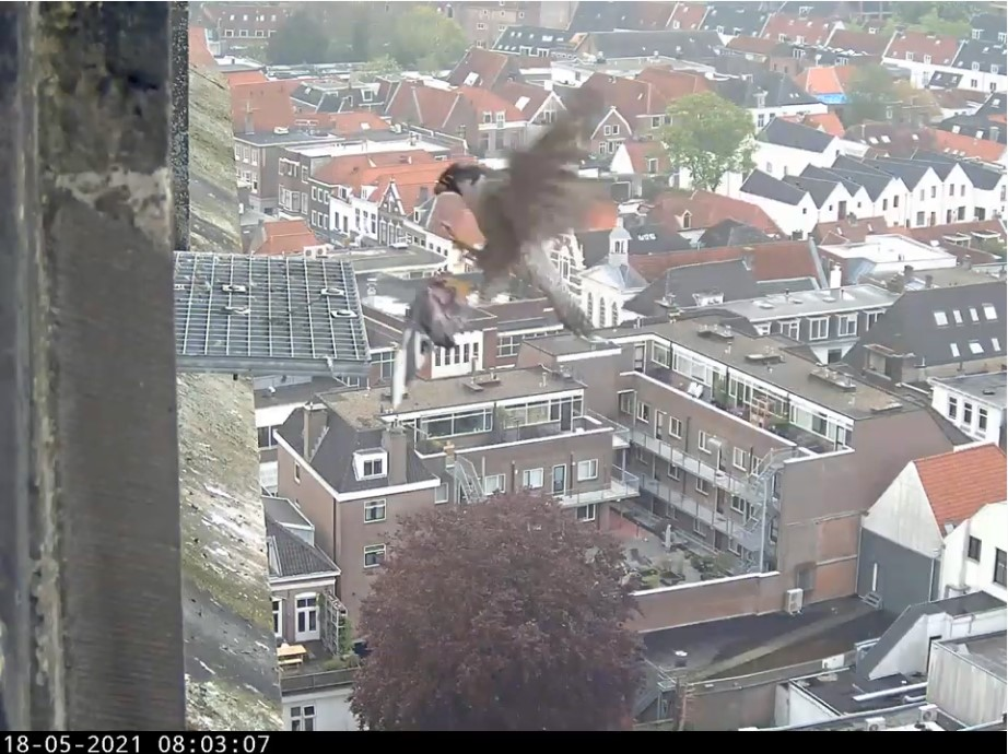 Amersfoort/OLV toren - Pagina 6 Amers136
