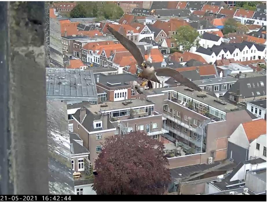 Amersfoort/OLV toren - Pagina 7 Amers137