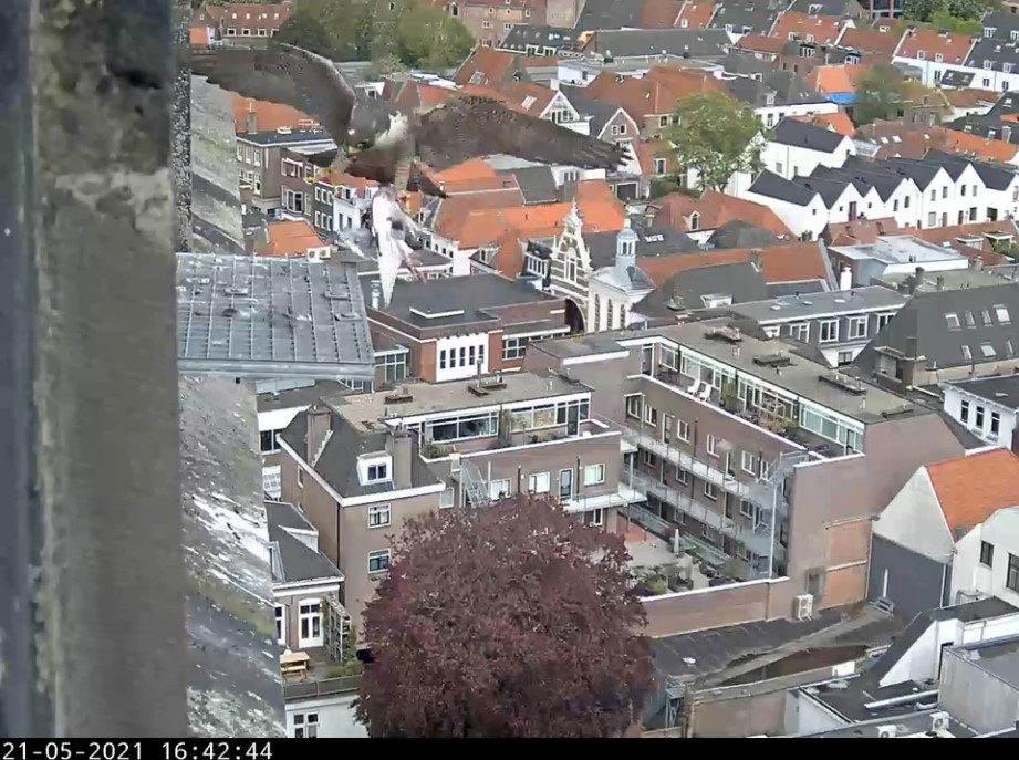 Amersfoort/OLV toren - Pagina 7 Amers138