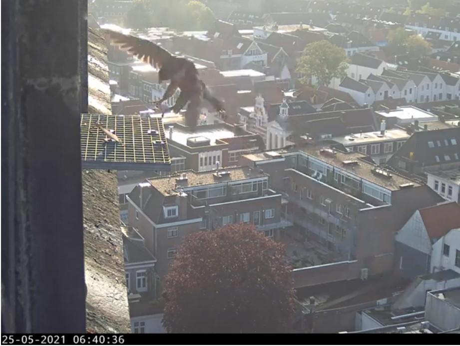 Amersfoort/OLV toren - Pagina 7 Amers139