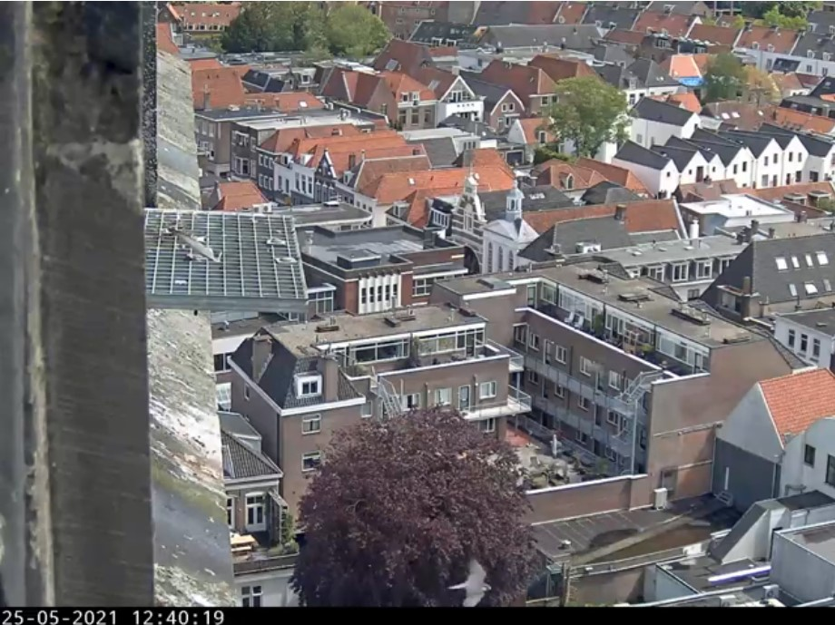 Amersfoort/OLV toren - Pagina 7 Amers141